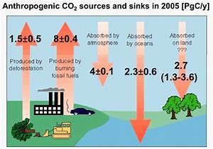 Anthropogenic Carbon