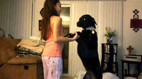 Girl Taught Her Sweet Dog Some Tricks Youtube