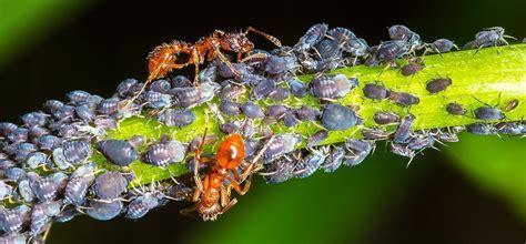 symbiosis   animal kingdom mutualism commensalism