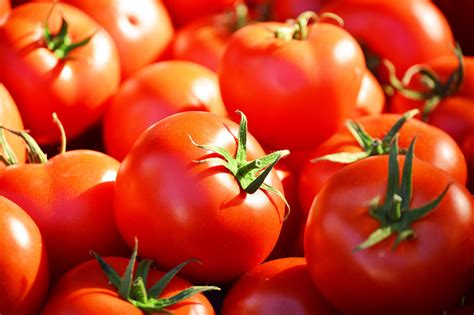 cuisine russe recettes tomates