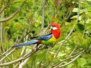 Te Papa's Blog | New Zealand's favourite bird