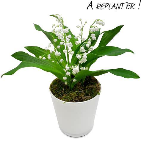 planter du muguet en pot planter du muguet en pot photo de fleur une pensee fleuriste