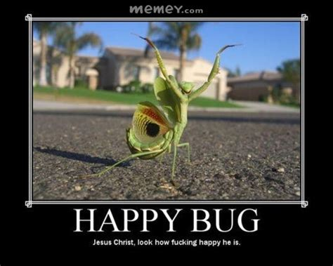 Bug Memes - insect memes funny insect pictures memey com