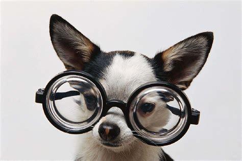Dog W Gl Es Dancing Dog Blog