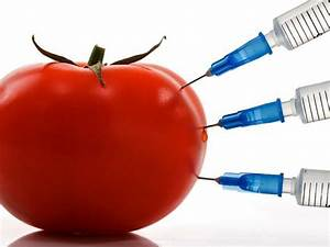 Hungary Cannot Prohibit The Distribution Of Gmo Products