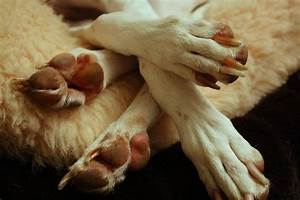 causes of brittle nails in dogs and their treatment