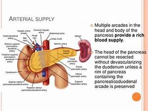 Pancreatic Arterial Supply Related Keywords - Pancreatic ...