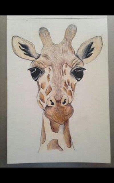giraffe drawing ideas  pinterest giraffe art