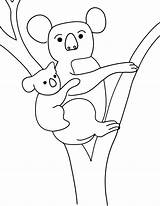 Koala Coloring Pages Colouring Printable Animal Template Penguin Cliparts Baby Emperor Bear Kolala Da Coloringbay Templates Comments Animalplace sketch template
