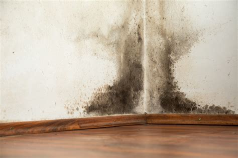 How To Turn Water Back On In House - how to remove black mold from walls howtoremoveblackmold