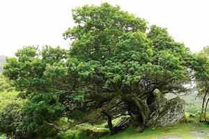 Bilder Bäume Gemalt : ein baum wie gemalt foto bild landschaft irland natur bilder auf fotocommunity ~ Orissabook.com Haus und Dekorationen