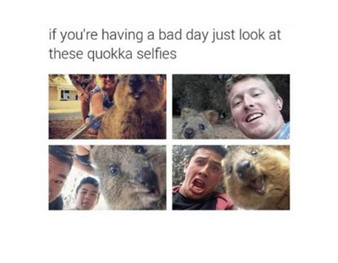 If You're Having A Bad Day Just Look At These Quokka