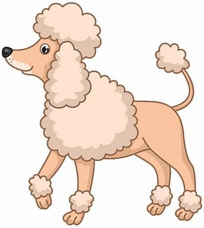 Clipart Poodle Dog Clip Transparent Cartoon Library