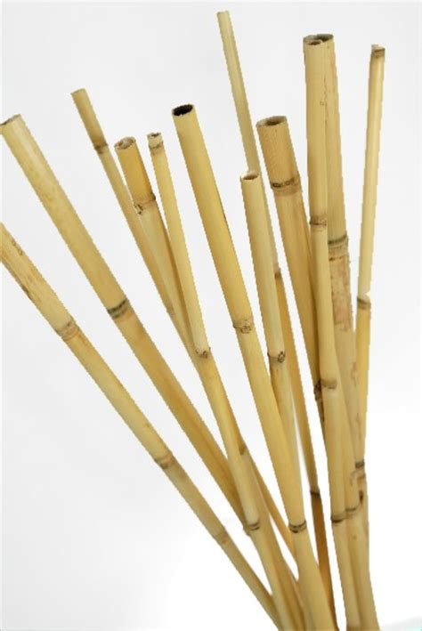 watercane bamboo poles   pack