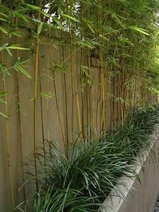 comment planter des bambous dans son jardin archzinefr With idee amenagement jardin paysager 1 haie de bambous une idee de plus en plus seduisante