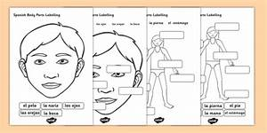 Spanish Body Parts Labelling Worksheet  Teacher Made