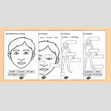 Spanish Body Parts Labelling Worksheet  Spanish, Body Parts