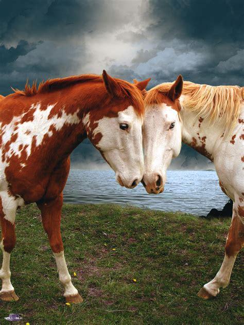 horses milk horse deviantart animal spill february cute katz shaman backyard amy power deviant touch