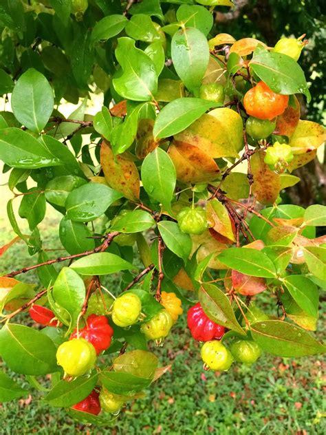 Fruit Salad Recipe Tree With Ice Cream Decoration Ideas