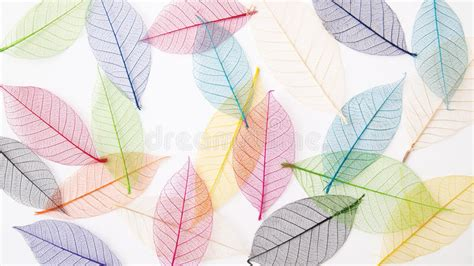 Blue And Yellow Backgrounds Leaves Background In Pretty Pastel Colors Royalty Free Stock Images Image 20990829