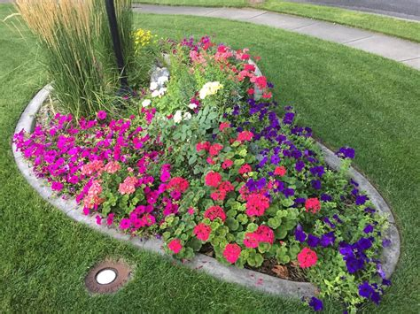 flower beds front house diy early start flowers for flower boxes