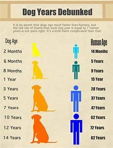 debunking dog years myth
