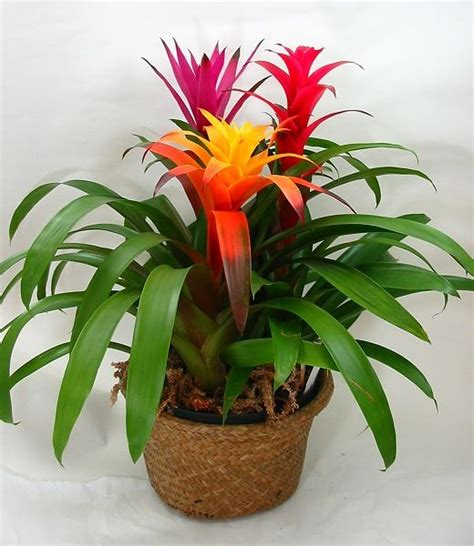 Flowering House Plants For Windows by House Plants Interesting Houseplants Plants Indoor