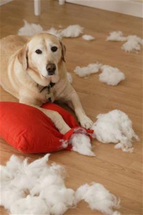 destructive puppy behavior pets