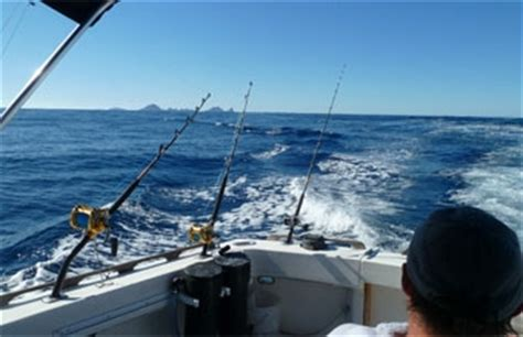 Fishing Boat Charters Dunedin by Sunfish Fishing Boat Charters Tauranga Nz Online