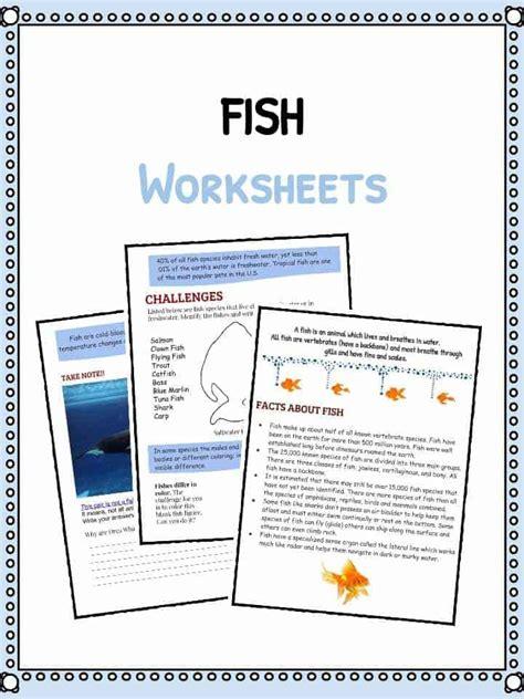 fish facts and worksheets kidskonnect 915 | Fish Worksheets