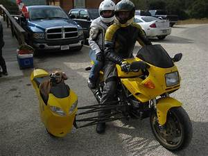 MOTORCYCLE 74: Ducati sidecar dog