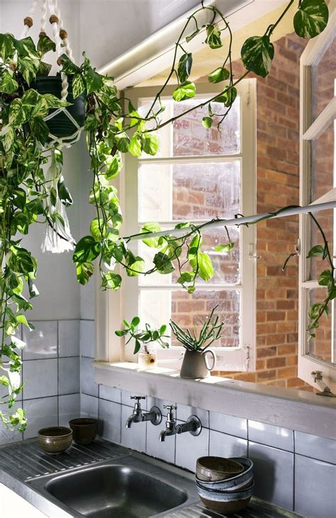 Kitchen Window Plants by Indoor Trailing Plants In Kitchen With Open Windows