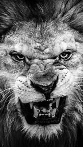 Dark Fierce Lion Face Macro iPhone 6 wallpaper | Cars ...