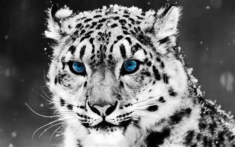 Animals Wallpapers Cool Animals by Best Animal Backgrounds Wallpaper 1920x1200 11683