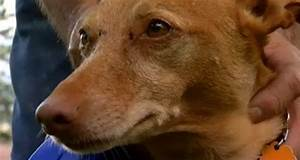 Eighty-Four-Year-Old Woman Saves Dog from Coyotes