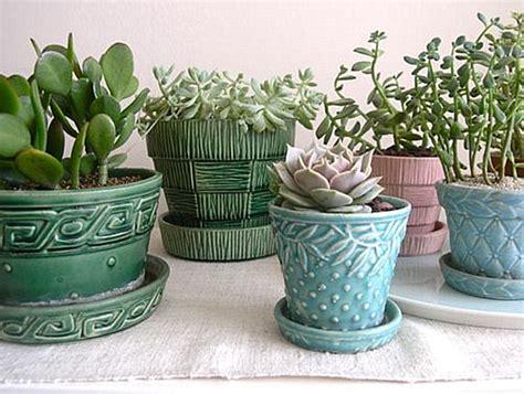 potting succulents indoors indoor gardening ideas to beautify your space