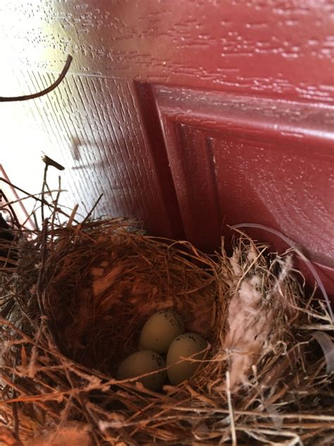 nestwatch house finch eggs nestwatch