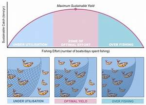 Maxium Sustainable Yield  Msy