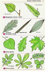 Листья земляники от артроза