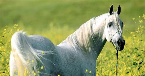 mewarnai gambar kuda mewarnai gambar