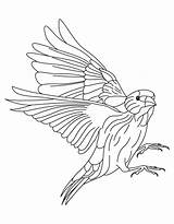 Goldfinch Coloring American Willow Popular sketch template