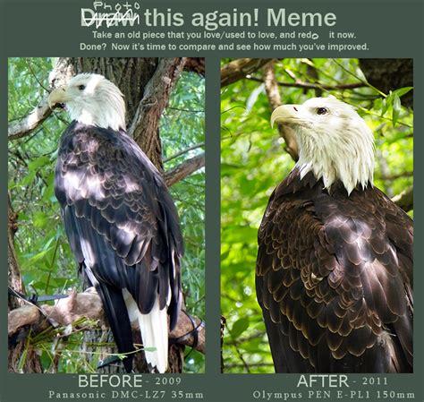 Meme Photography - photography bald eagle meme by mishkuu on deviantart