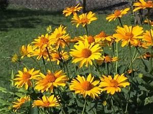 Gelbe Winterharte Pflanzen : garten abc ~ Markanthonyermac.com Haus und Dekorationen