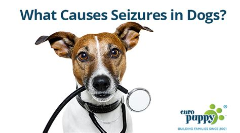Common Causes Of Dog Seizures