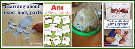 kid friendly insect activities  printables mamas