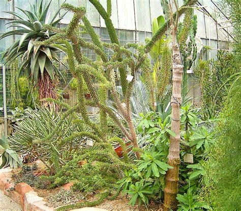 Gartenfest Botanischer Garten Heidelberg by Botanischer Garten Heidelberg