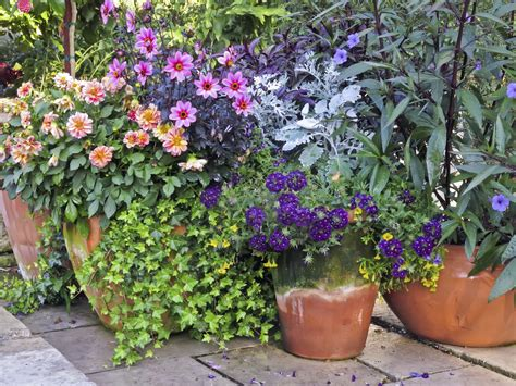 how to plant a container garden container garden placement learn how to plant a container garden