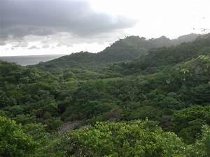 Costa Rican Rainforest | Pics4Learning