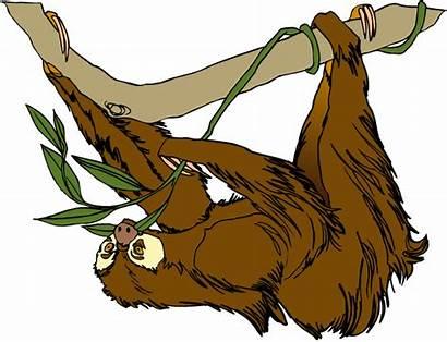 Sloth Clipart Clip Transparent Rainforest Reading Slow