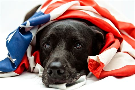 dog safety tips  memorial day aehntcomaehntcom